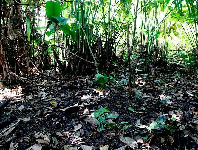 Arbitraje Chevron: Se mantiene decisión sobre indemnización en la Amazonia