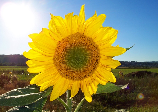 Constituido el Tribunal del arbitraje Sunflower Olmeda contra España